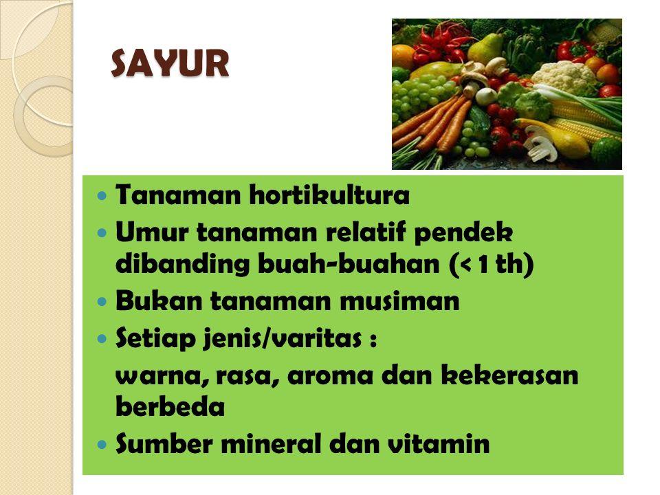 SAYUR Tanaman hortikultura