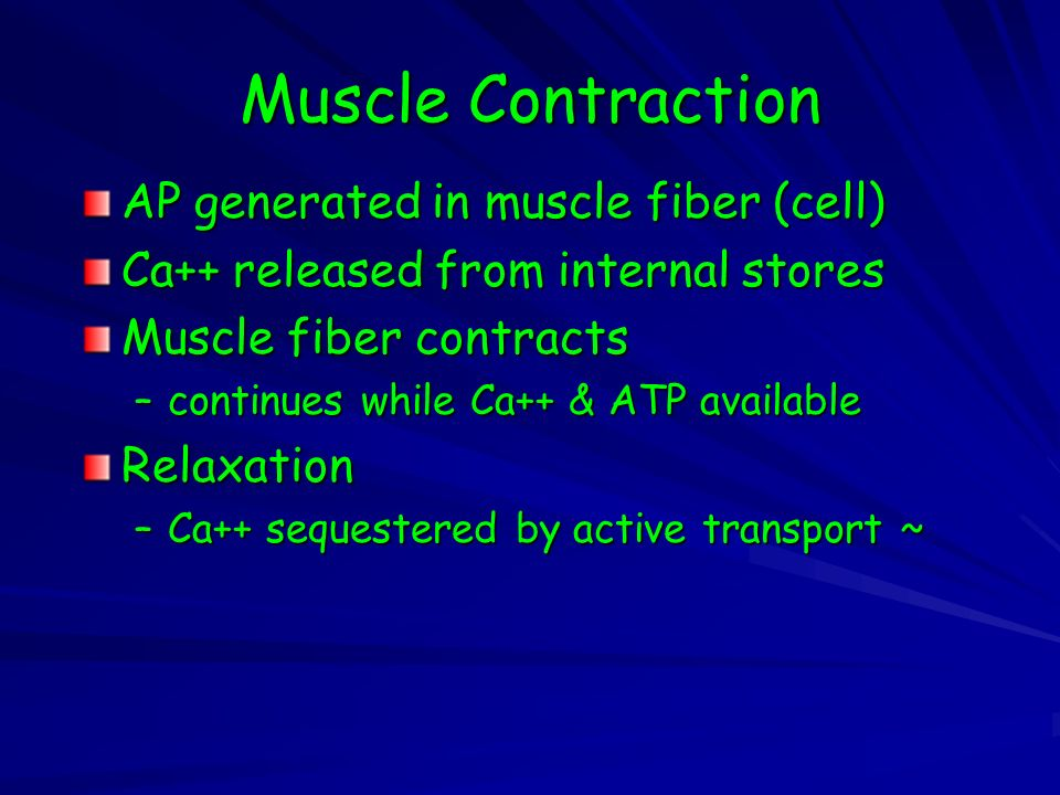 Muscle Contraction AP generated in muscle fiber (cell)
