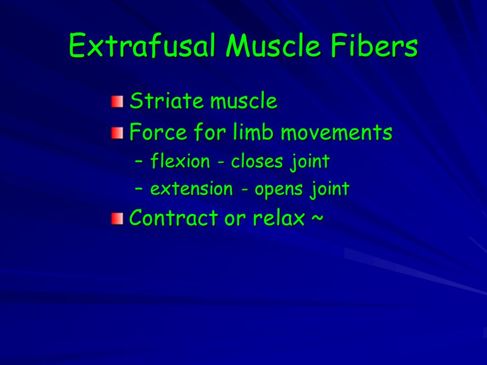 Extrafusal Muscle Fibers