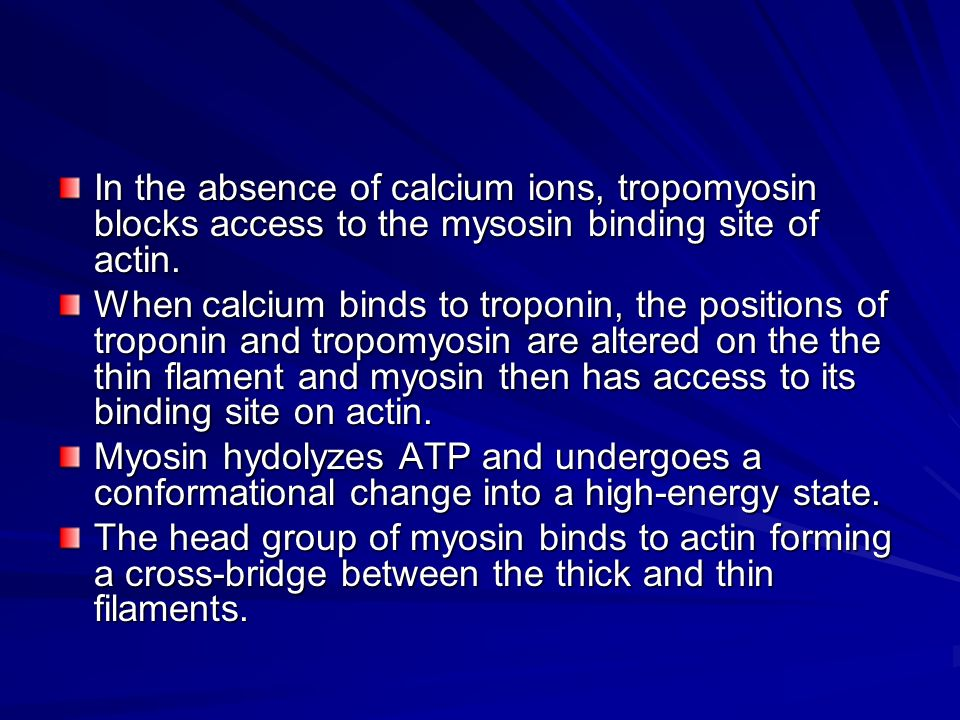 In the absence of calcium ions, tropomyosin blocks access to the mysosin binding site of actin.