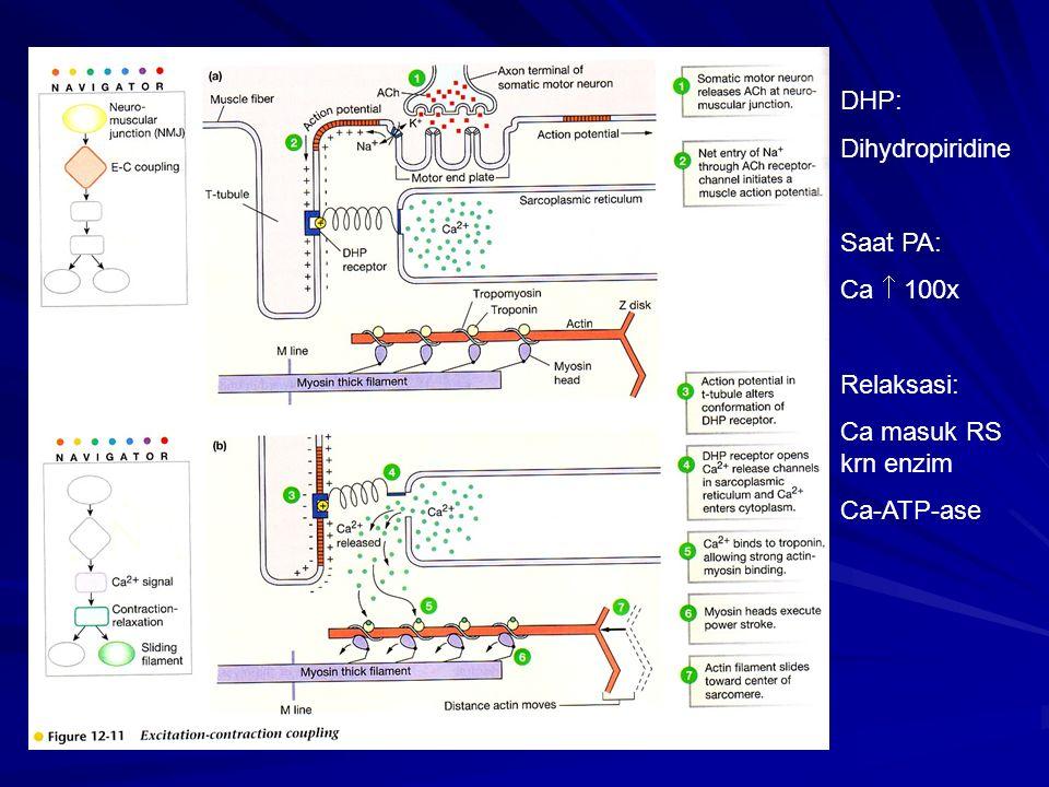 DHP: Dihydropiridine Saat PA: Ca  100x Relaksasi: Ca masuk RS krn enzim Ca-ATP-ase