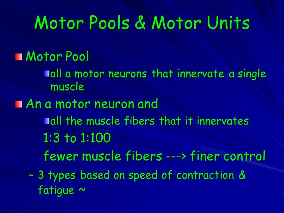 Motor Pools & Motor Units