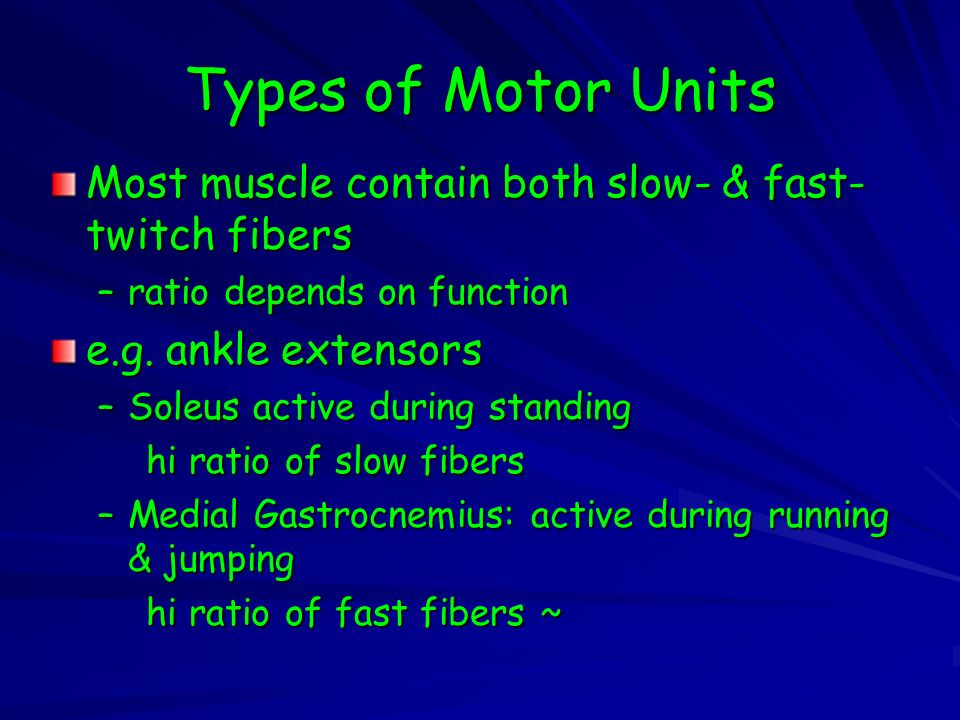Types of Motor Units Most muscle contain both slow- & fast-twitch fibers. ratio depends on function.