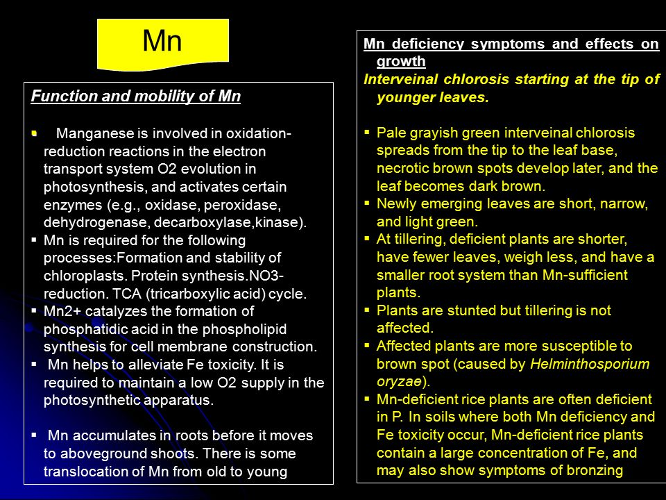 Mn Function and mobility of Mn