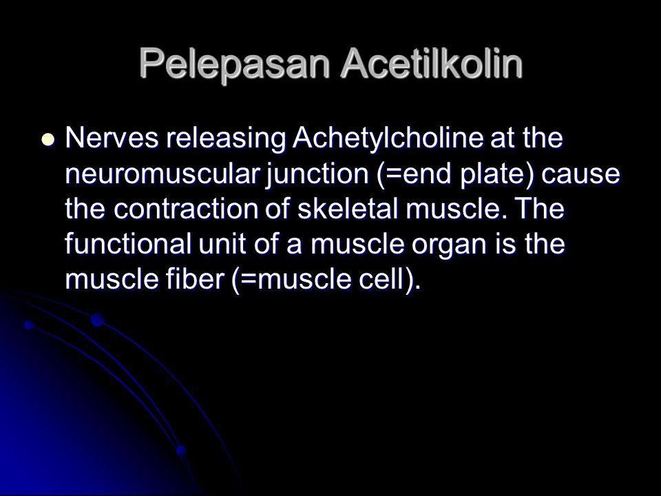 Pelepasan Acetilkolin