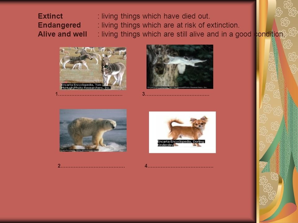 Extinct : living things which have died out.