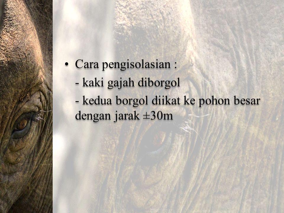 Cara pengisolasian : - kaki gajah diborgol - kedua borgol diikat ke pohon besar dengan jarak ±30m