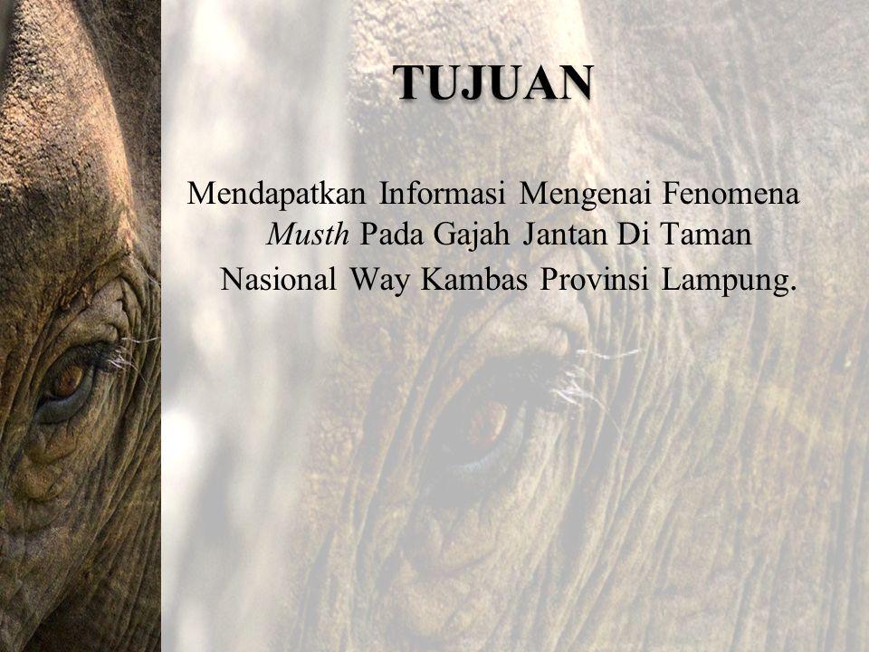TUJUAN Mendapatkan Informasi Mengenai Fenomena Musth Pada Gajah Jantan Di Taman Nasional Way Kambas Provinsi Lampung.