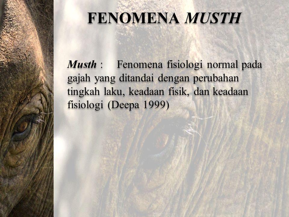 FENOMENA MUSTH