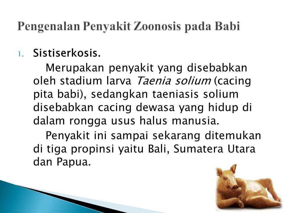 Pengenalan Penyakit Zoonosis pada Babi