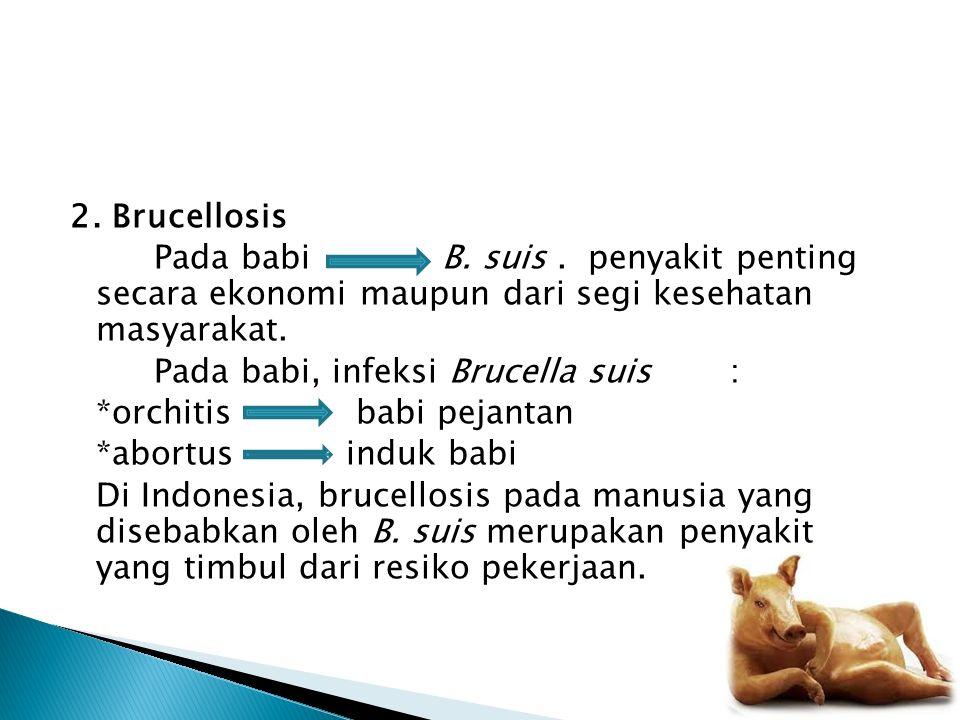 2. Brucellosis Pada babi B. suis . penyakit penting secara ekonomi maupun dari segi kesehatan masyarakat.