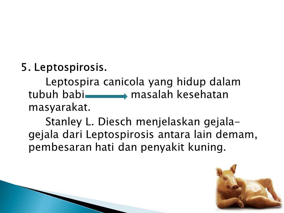 5. Leptospirosis. Leptospira canicola yang hidup dalam tubuh babi masalah kesehatan masyarakat.