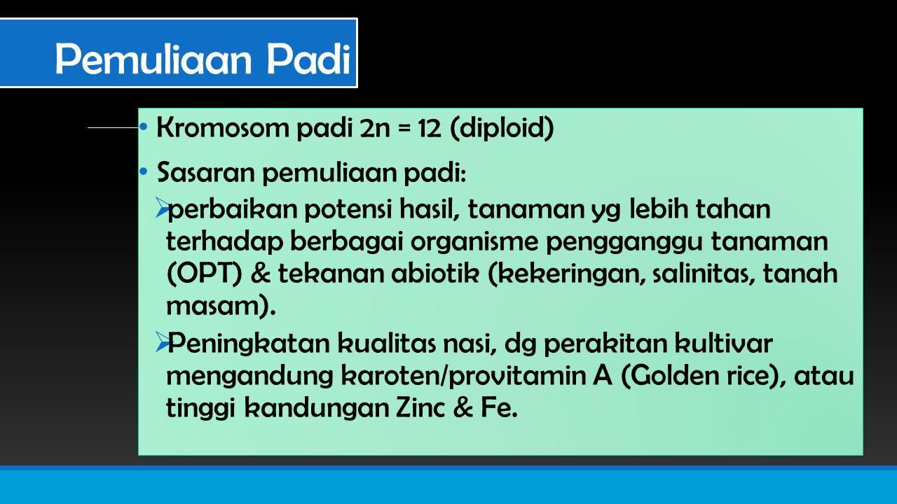 Pemuliaan Padi Kromosom padi 2n = 12 (diploid) Sasaran pemuliaan padi: