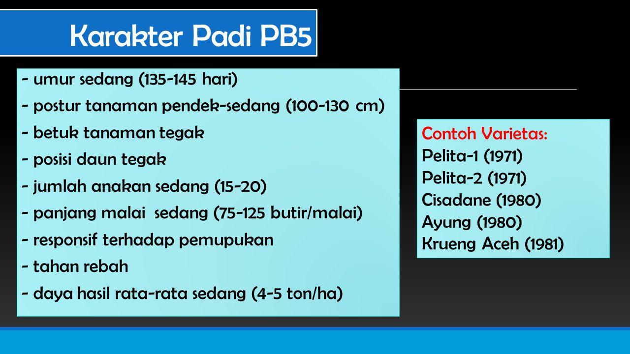 Karakter Padi PB5 - umur sedang (135-145 hari)
