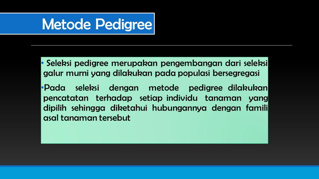 Metode Pedigree Seleksi pedigree merupakan pengembangan dari seleksi galur murni yang dilakukan pada populasi bersegregasi.