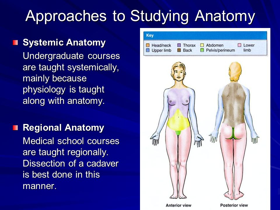 Approaches to Studying Anatomy