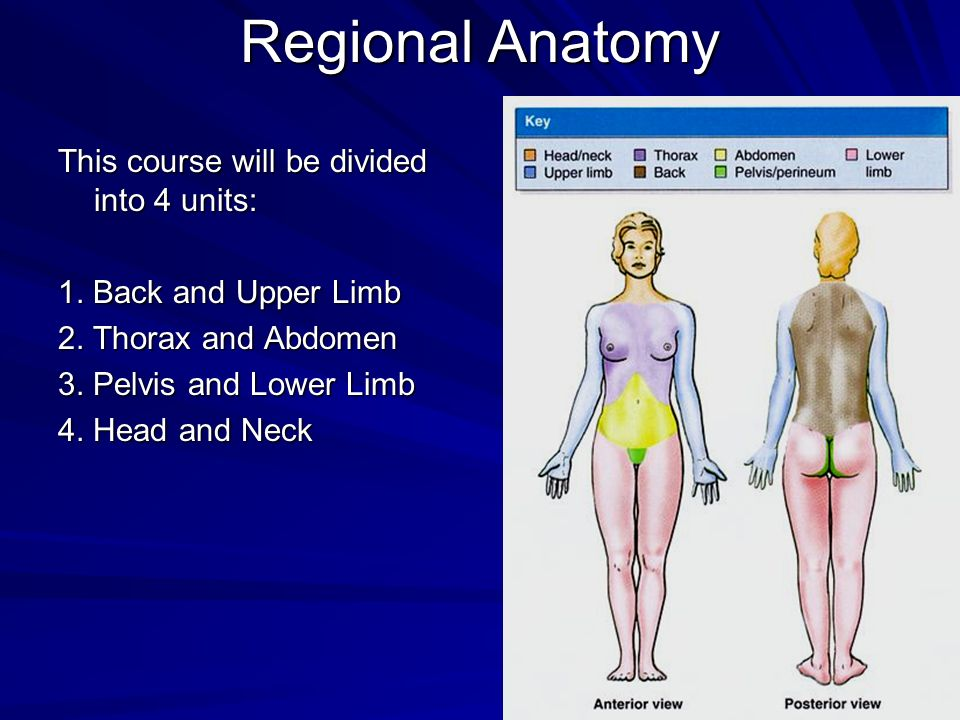 Regional Anatomy This course will be divided into 4 units: