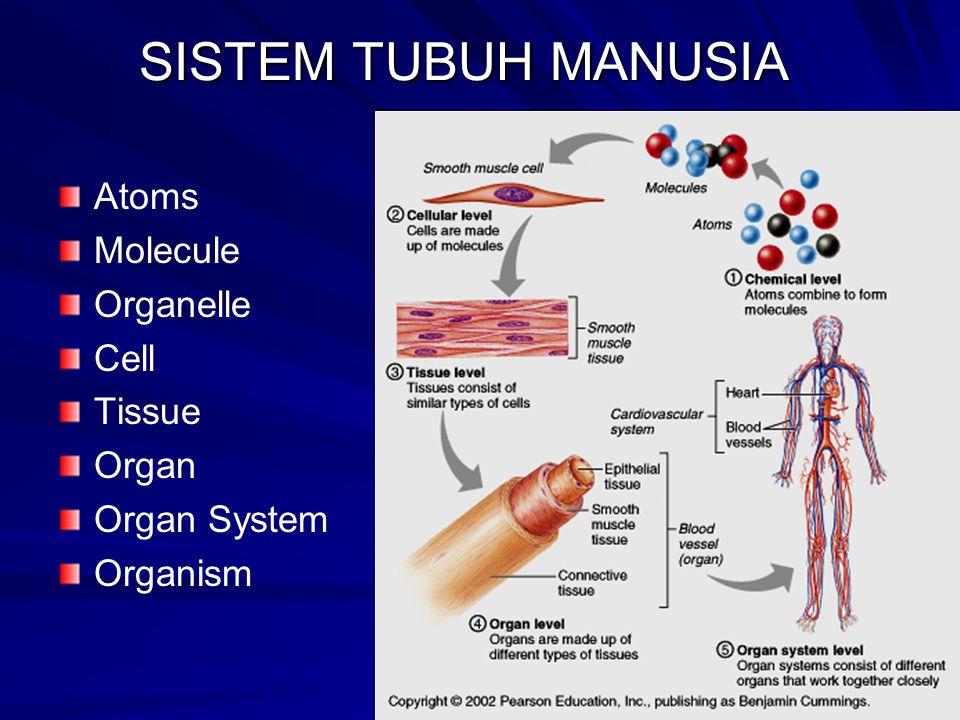 SISTEM TUBUH MANUSIA Atoms Molecule Organelle Cell Tissue Organ