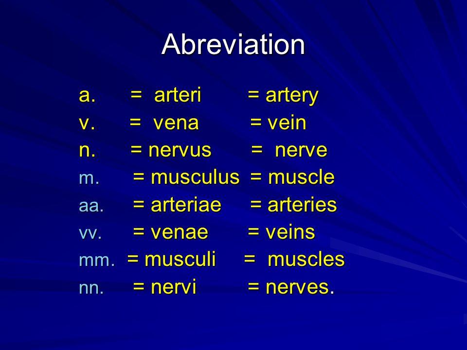 Abreviation a. = arteri = artery v. = vena = vein n. = nervus = nerve