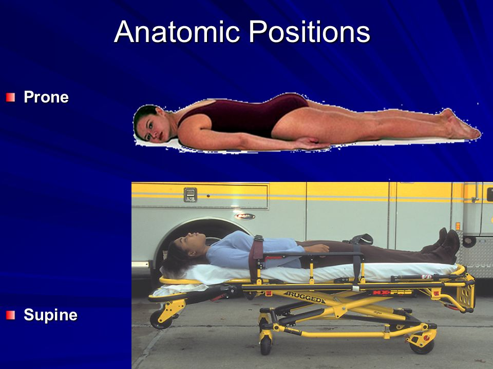 Anatomic Positions Prone Supine