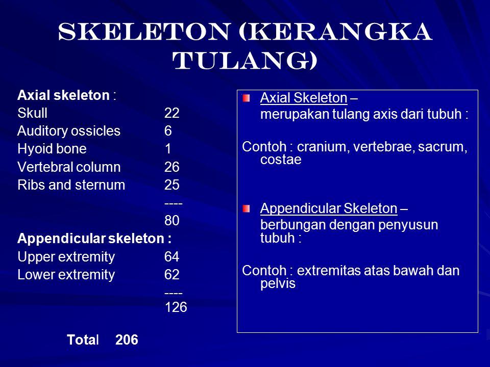 SKELETON (Kerangka Tulang)