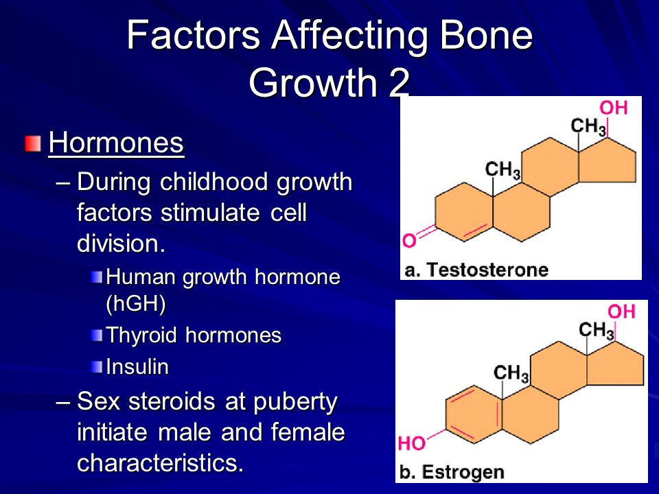 Factors Affecting Bone Growth 2
