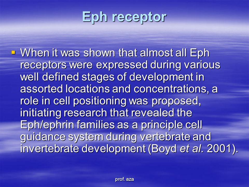 Eph receptor