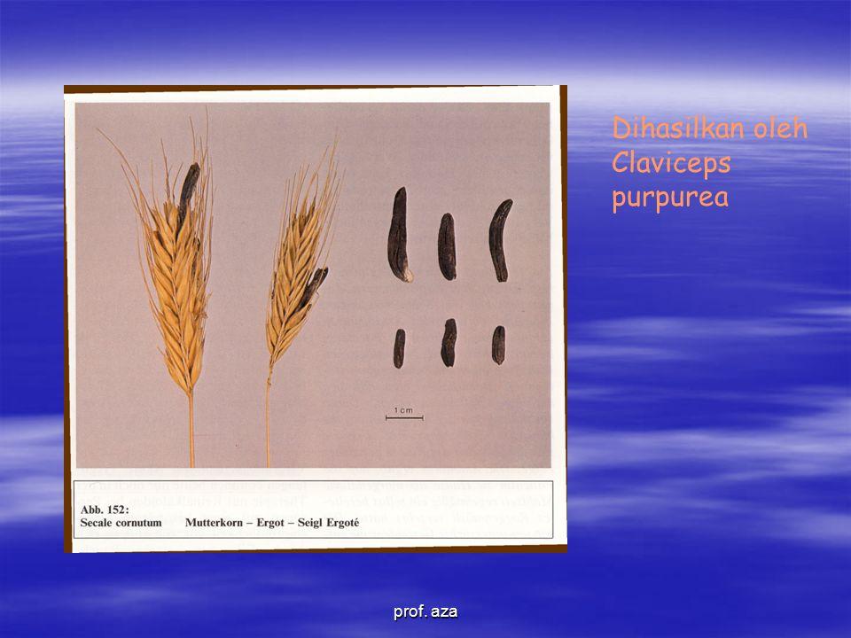 Dihasilkan oleh Claviceps purpurea