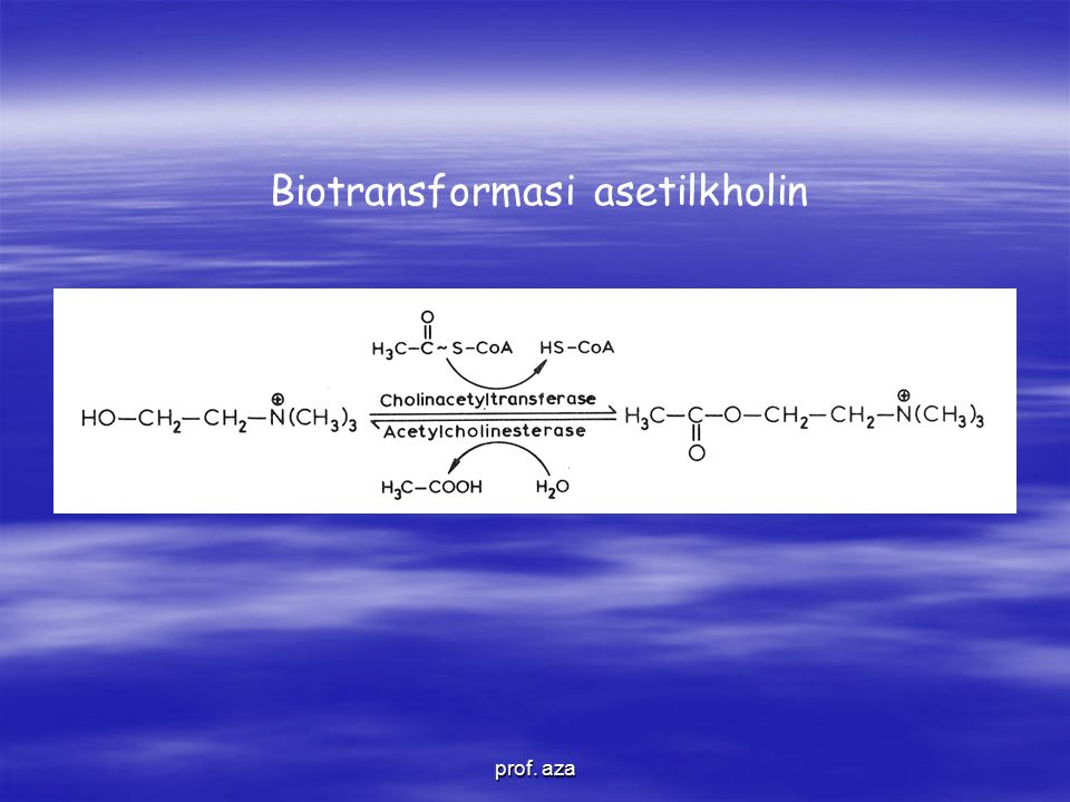 Biotransformasi asetilkholin