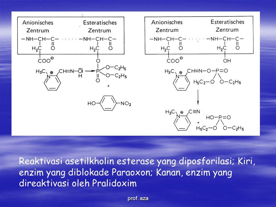 Reaktivasi asetilkholin esterase yang diposforilasi; Kiri, enzim yang diblokade Paraoxon; Kanan, enzim yang direaktivasi oleh Pralidoxim