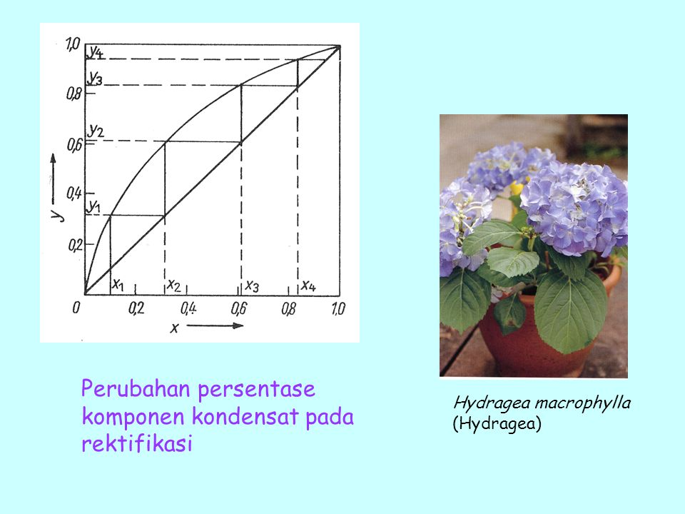 Perubahan persentase komponen kondensat pada rektifikasi