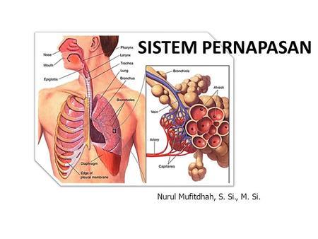 Sistem Pernafasan Manusia Ppt Download