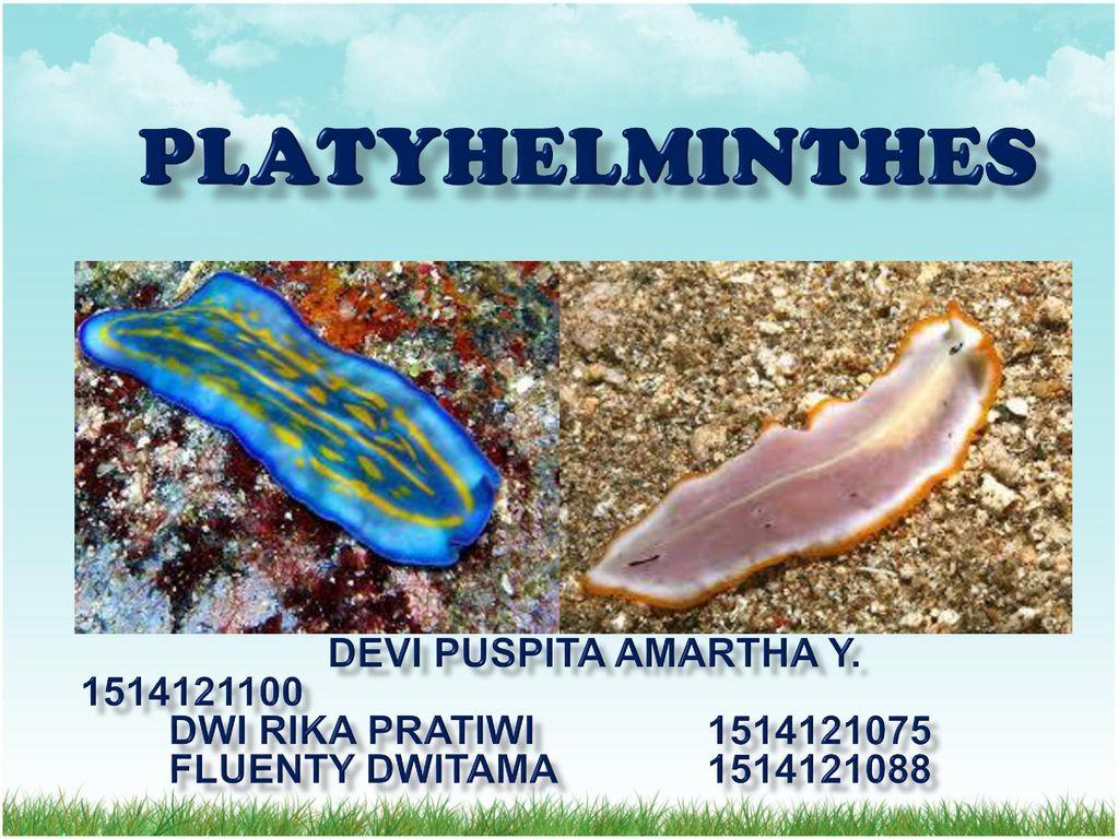 Filum platyhelminthes ppt. Állattan | Digitális Tankönyvtár