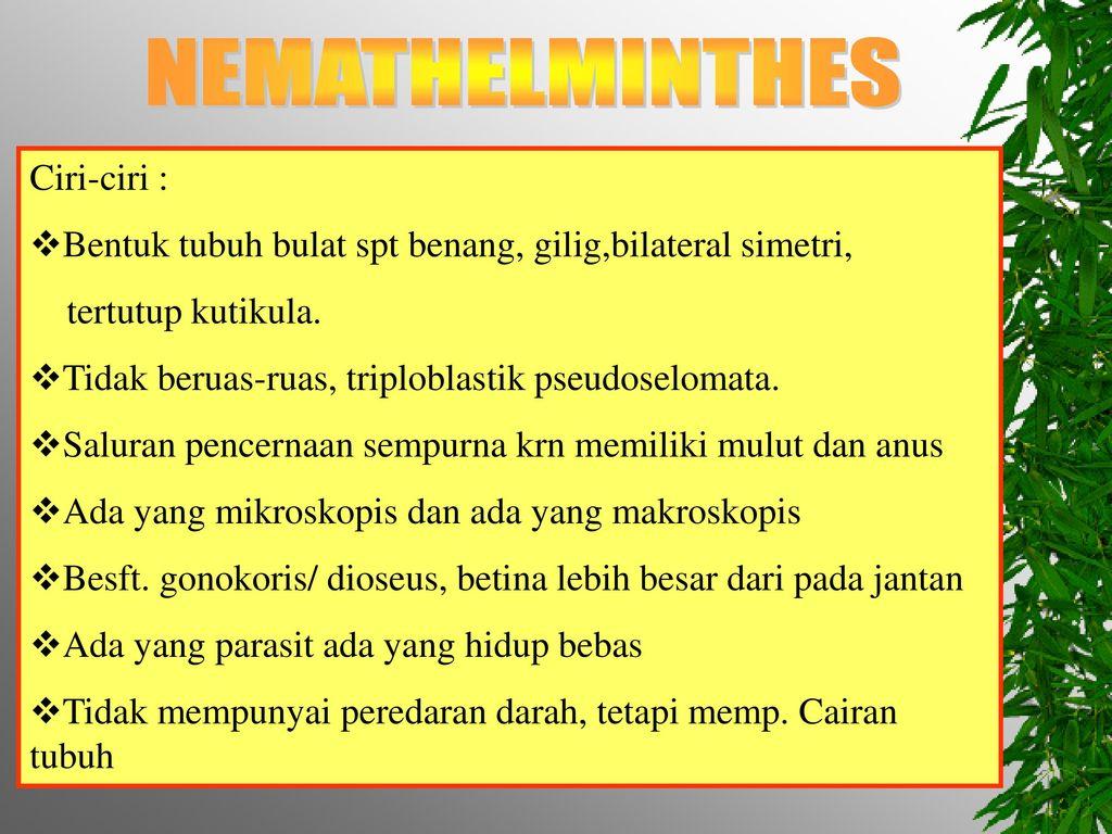 contoh nemathelminthes yang hidup bebas