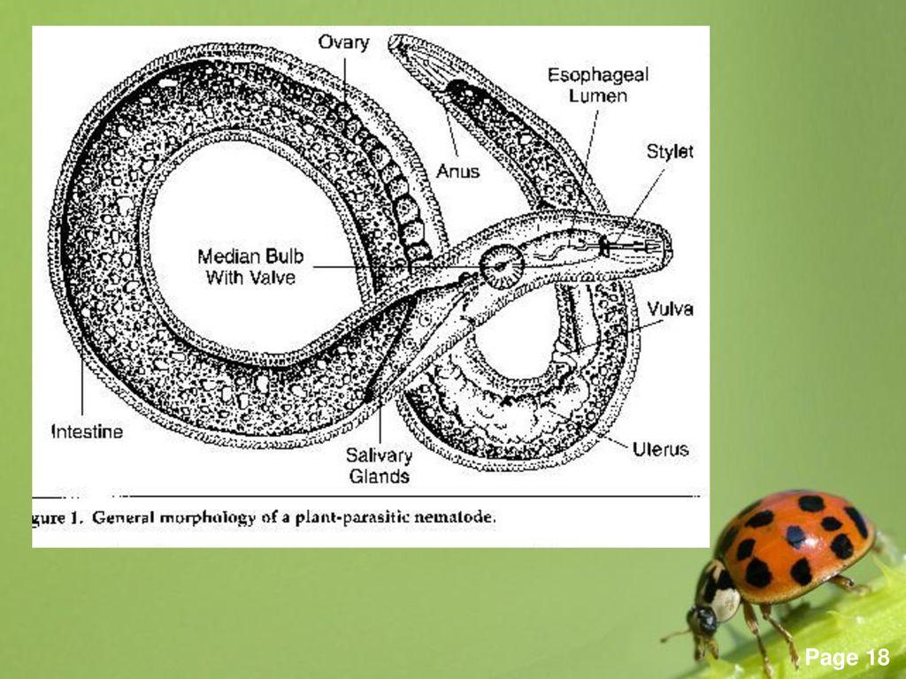 kezelési rend minden típusú parazitához gyógyszer normil a parazitákból