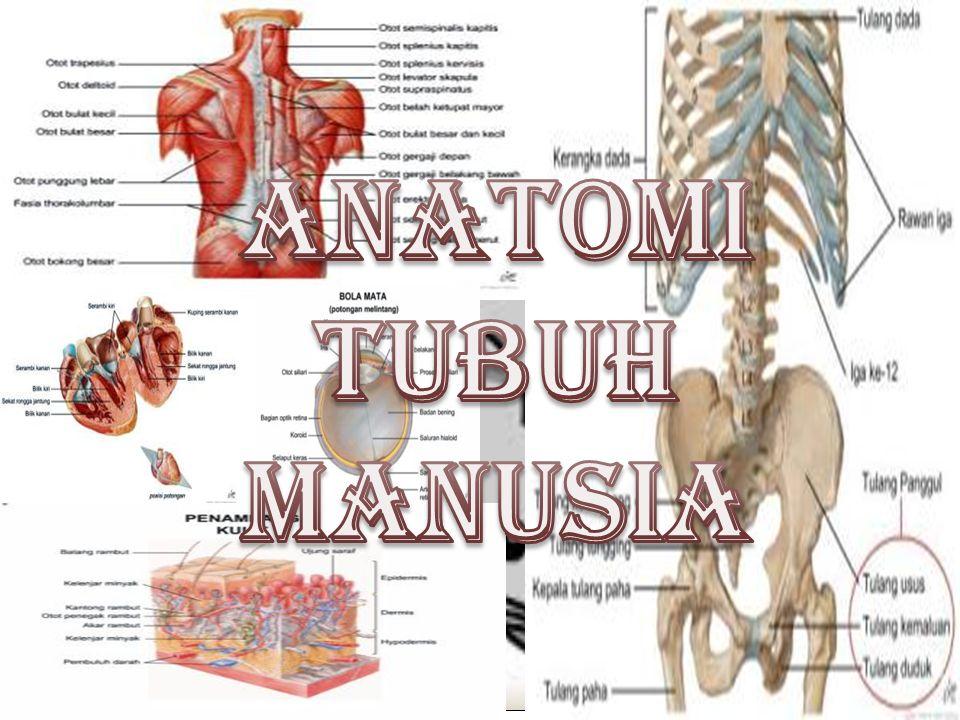 Anatomi Tubuh Manusia Ppt Download
