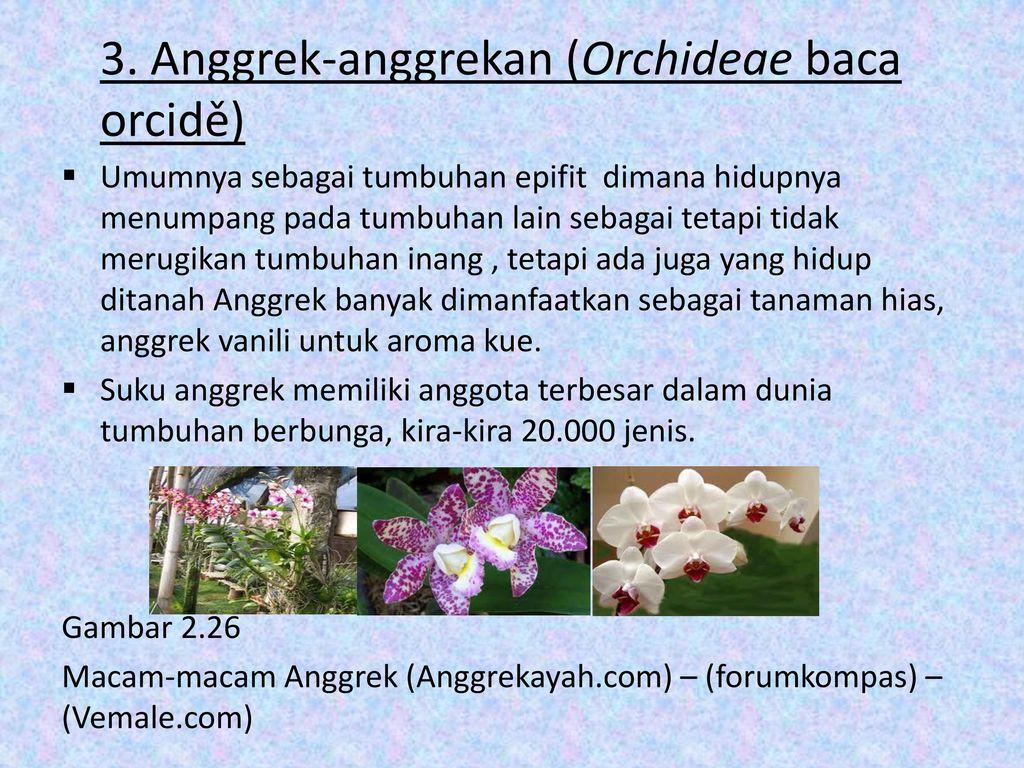 Tren Untuk Tanaman Bunga Anggrek Hidup Menumpang Pada Pohon Mangga Bunga Hias