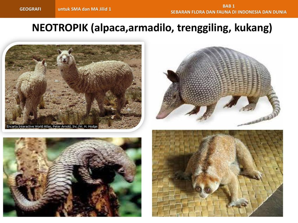 970 Gambar Fauna Kawasan Oriental Gratis Terbaru