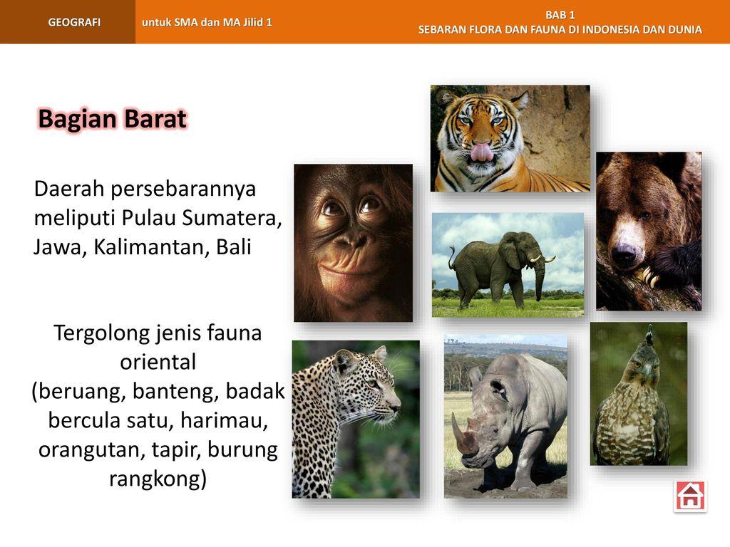 1 Bab Sebaran Flora Dan Fauna Di Indonesia Dan Dunia Ppt Download