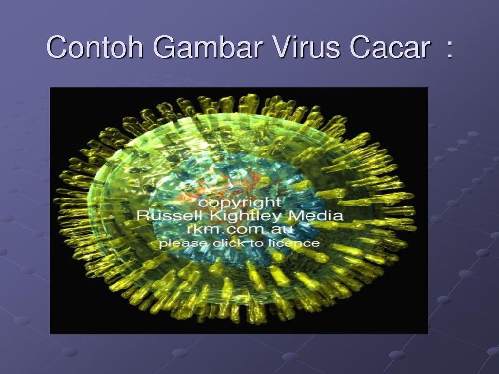 Viruses Ppt Download