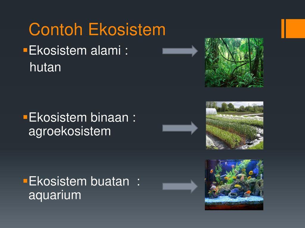 Konsep Konsep Ekosistem Ppt Download