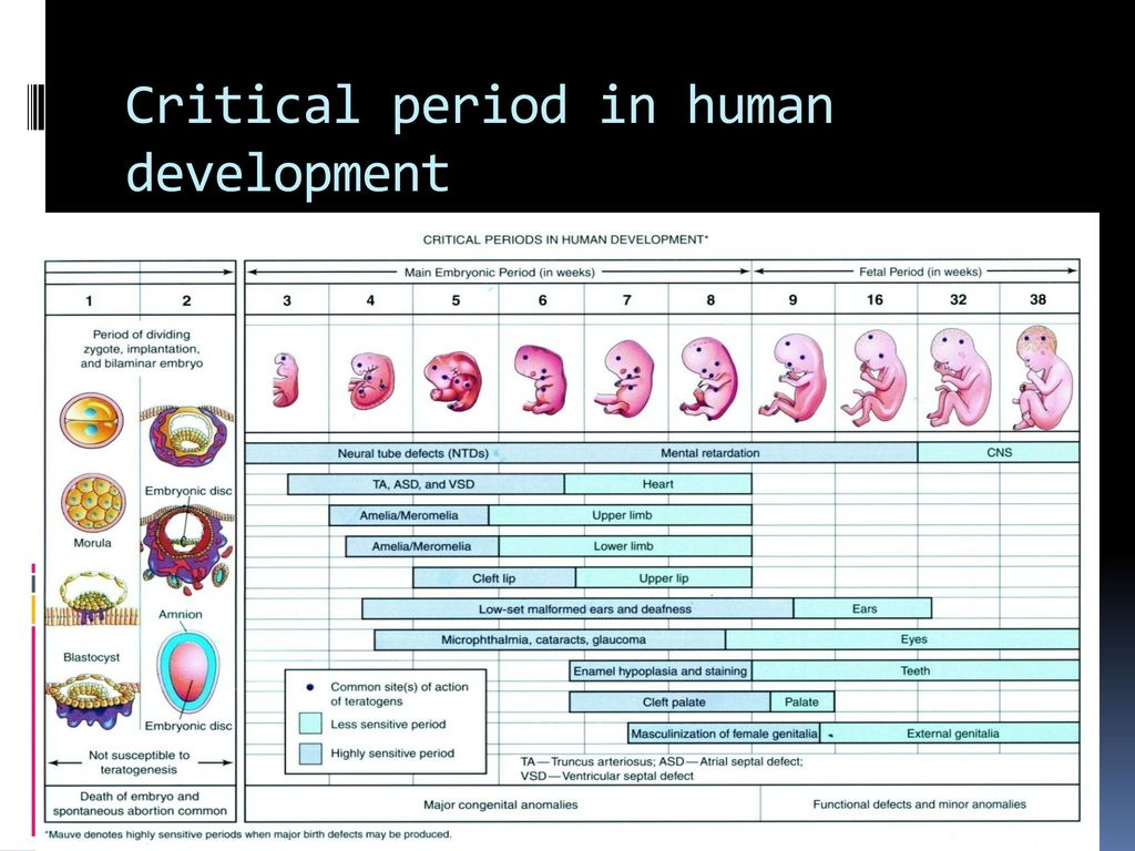 the periods of human prenatal development and the effects of teratogens Human critical periods of development how and why do things go wrong in development embryological development is a robust biological system able to cope with teratogen synergism, different environmental effects can act individually or in combination on the same developing system.