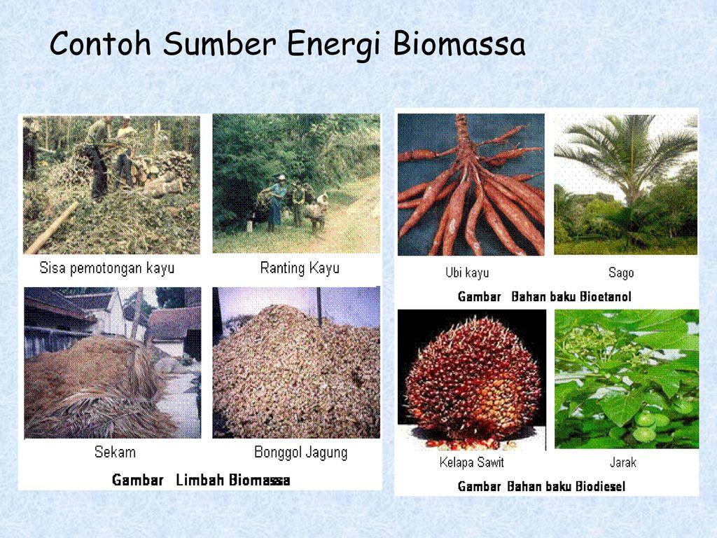 Hasil gambar untuk biomassa