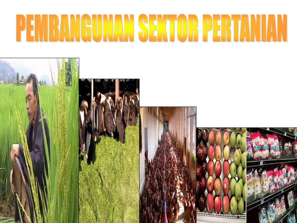 Pembangunan Sektor Pertanian Ppt Download