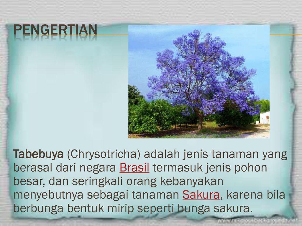 Keanekaragaman Tumbuhan Ppt Download