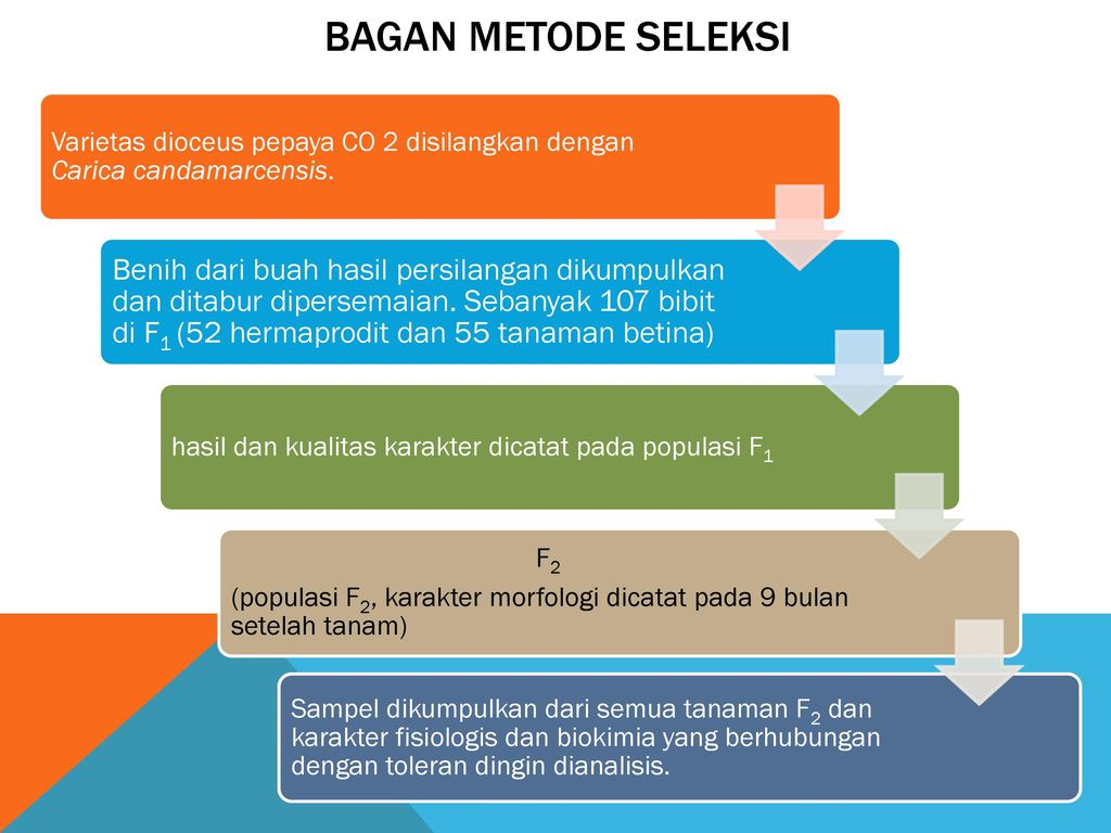 Pemuliaan tanaman menyerbuk silang ppt download 6 bagan ccuart Image collections