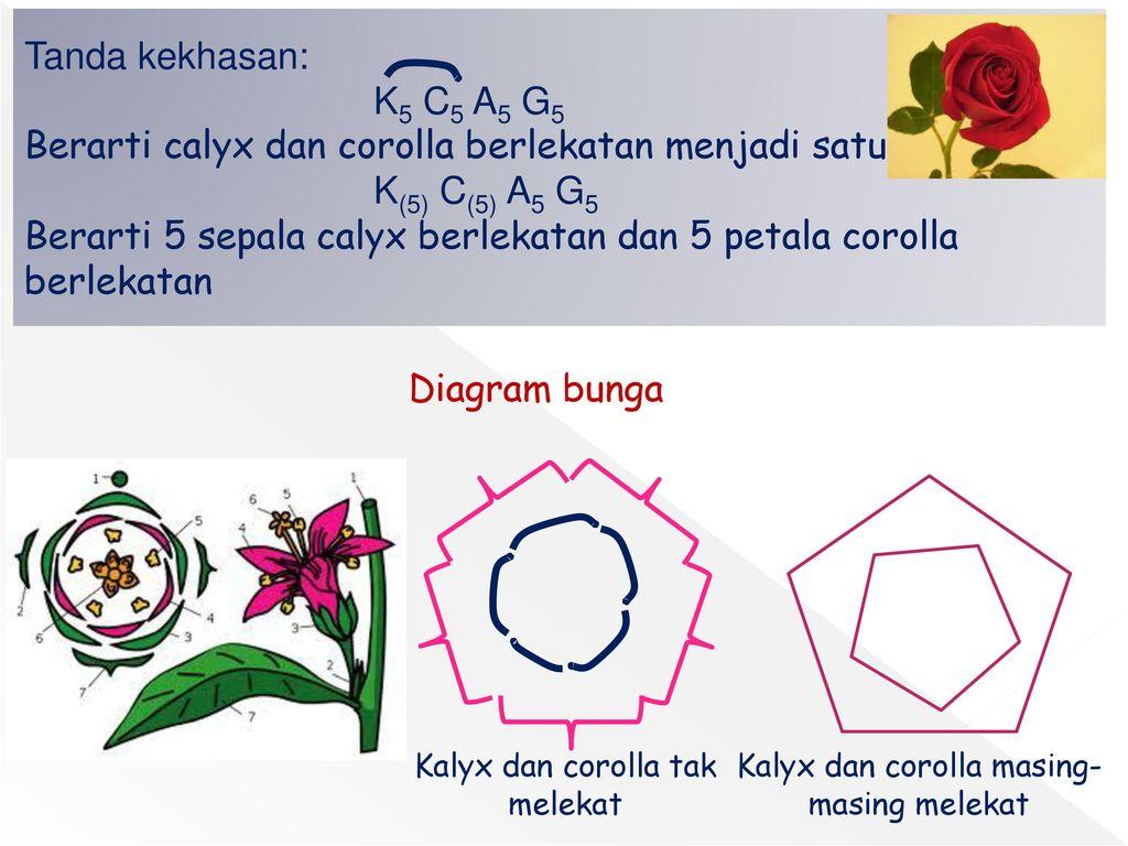 Ppt diagram bunga dan rumus bunga search for wiring diagrams bunga flos ppt download rh slideplayer info bunga bunga dance berlusconi bunga bunga parties ccuart Gallery