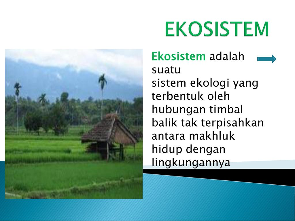 Ekosistem Ekosistem Adalah Suatu Sistem Ekologi Yang Terbentuk Oleh