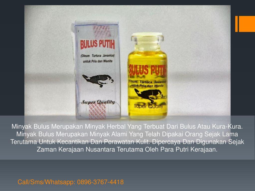 Minyak Bulus Call Sms Whatsapp Ppt Download Herbal 2 Merupakan