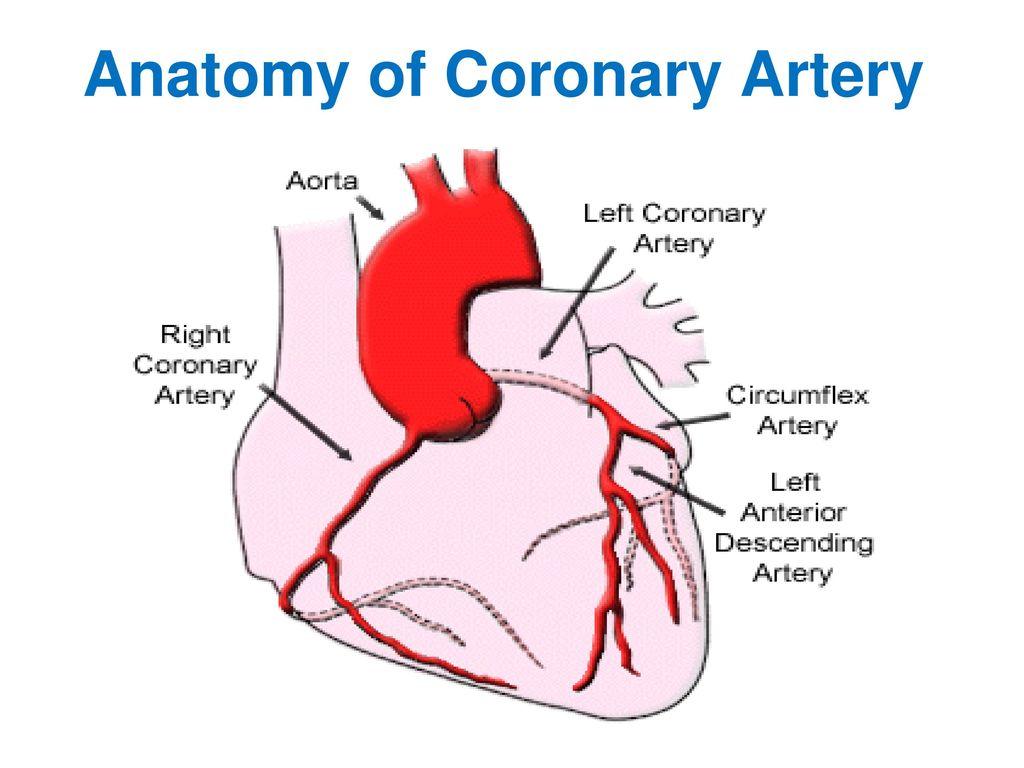 Penyakit jantung koroner ppt artikel kesehatan penyakit jantung.